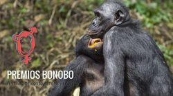 El futuro de los bonobos depende del
