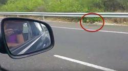Un perro persigue el coche de sus dueños tras ser