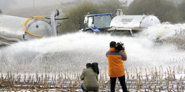 Productores gallegos tiran unos 50.000 litros de leche en protesta por los bajos