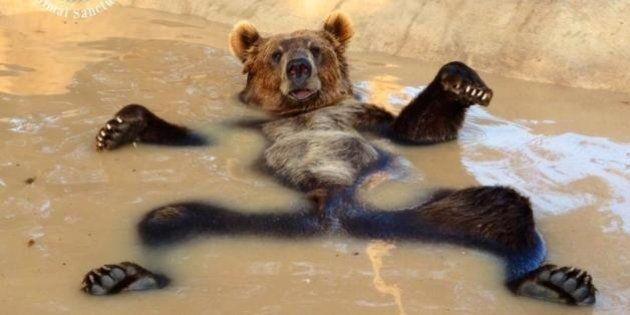 El oso y los montajes que entretuvieron a Reddit una tarde de