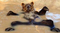 El oso feliz y los montajes de una tarde de verano