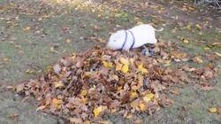 Un cerdito, un montón de hojas, un descubrimiento... ¡y la