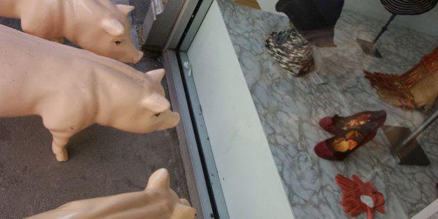 Terneros y cerdos más viajados que Phileas