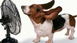 ¿Cómo mantener tu casa fresca sin aire acondicionado? Diez