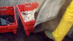 El original método de unos pescadores para reciclar el plástico que contamina el mar