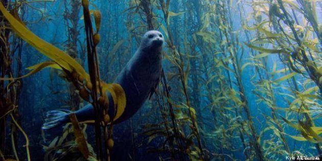 Fotos submarinas: las mejores imágenes de animales acuáticos de 2013