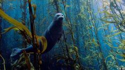 Las mejores fotos de animales marinos de