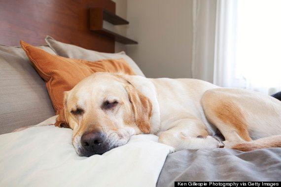 23 signos de que tu mascota es tu primer hijo