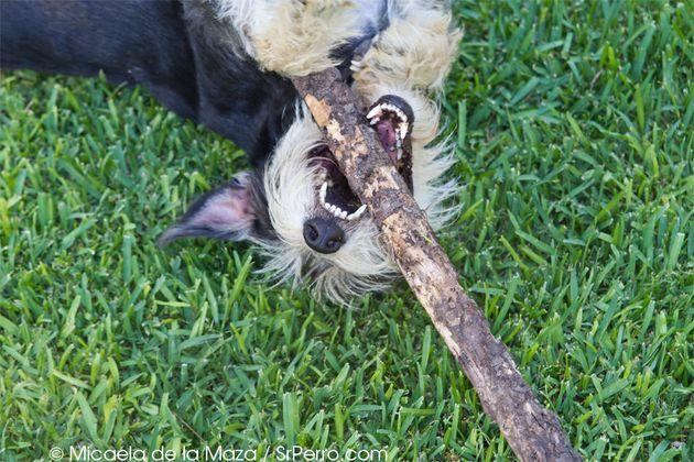 5 mitos sobre la educación canina: del pis a la