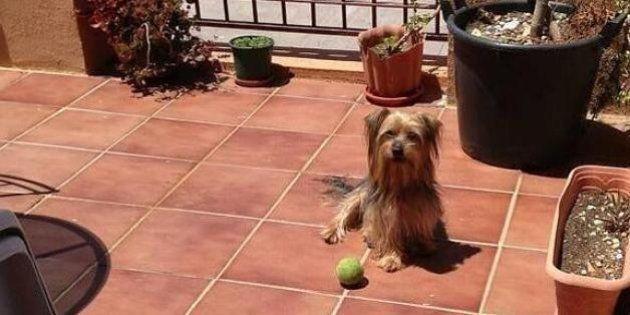 La historia de Pancho, el perro que murió en Nochebuena por los