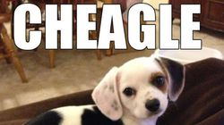 Estas mezclas de perros te encantarán