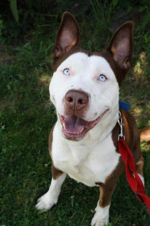 Perros híbridos: 19 cruces de dos razas que te encantarán