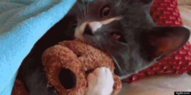 15 GIFs animados de gatos para