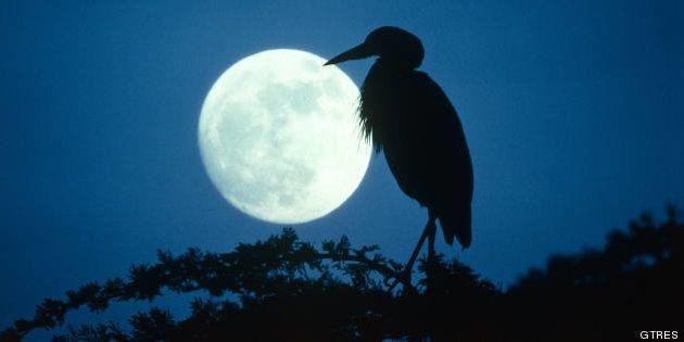 Se duerme peor con luna llena: los ciclos lunares alteran el sueño, según un estudio en 'Current