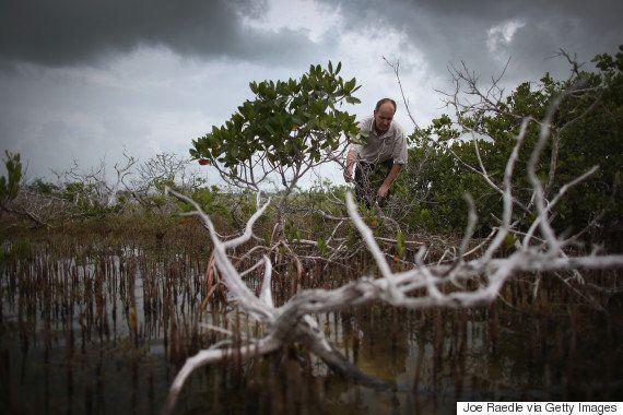 Cuatro mitos sobre cómo actuar contra el cambio climático de forma