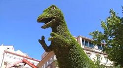 El drama veraniego de Dinoseto