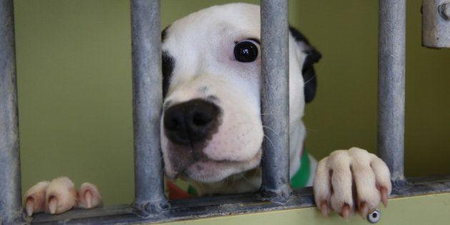 Perros abandonados: El Refugio denuncia que se abandonan 150.000 canes al año en