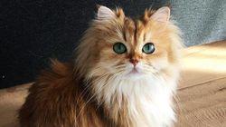 Smoothie es (posiblemente) la gata más bonita del