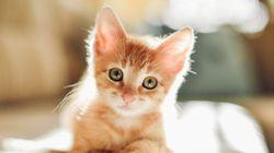 12 cosas que aprendes cuando adoptas un gato