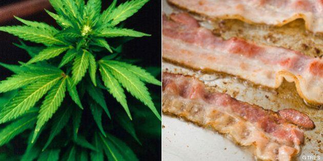 Cerdo criado con marihuana: la 'receta' de una granja de