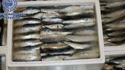 Estas sardinas congeladas tienen sorpresa