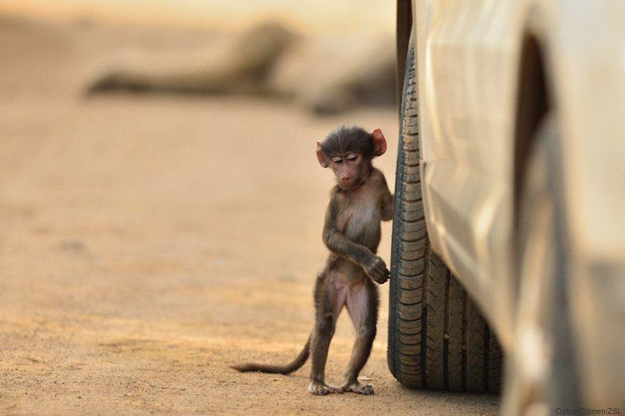 11 de las mejores fotografías de animales que verás en todo el