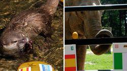Discrepancias en el reino animal por el resultado de la