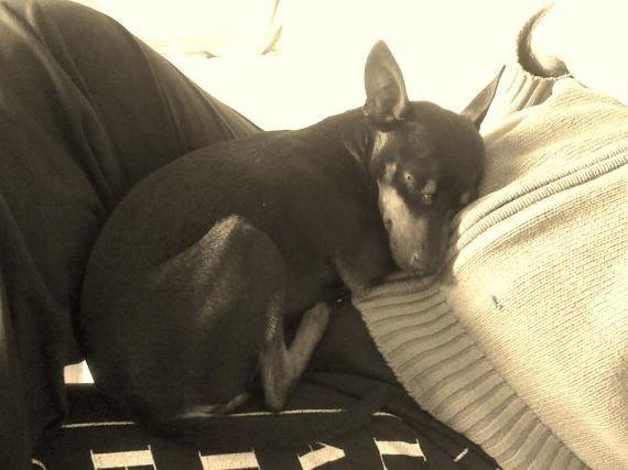 10 razones por las que prefiero un perro a un