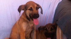 Así son Chapa y Pote, los cachorros que un desalmado tiró a una balsa de