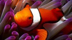 Los bichinos de la semana: especial bajo el mar