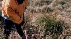 La Sierra de Tramuntana resurgirá de sus