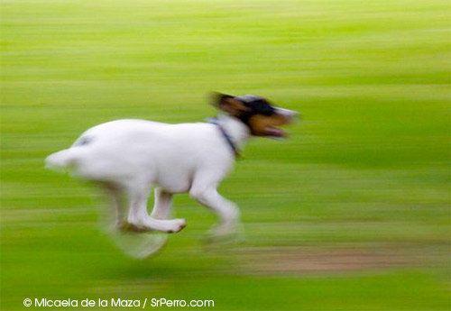 La complicada tarea de pasear a un perro (suelto) en