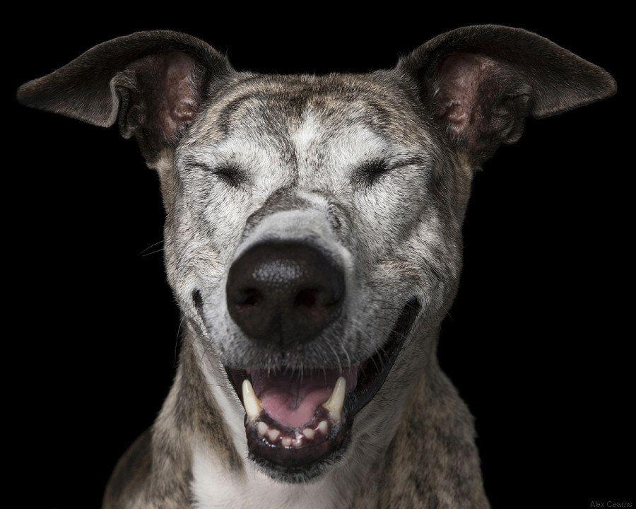 Estas fotos de perros zen te harán sentir muy