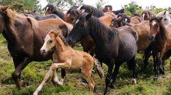 Unos 5.000 caballos van al matadero cada mes por la