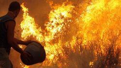 La Ley de Montes permitirá recalificar zonas quemadas: