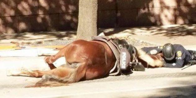 Un policía consuela a su caballo herido de muerte en Houston... y conmueve al
