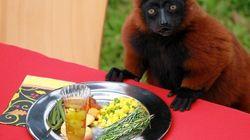 Los bichinos de la semana: ¡ñam ñam!, míralos comer