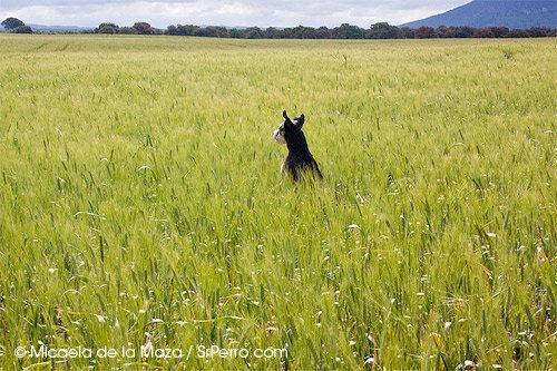 Los perros y las vacaciones de verano: manual de