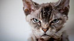 Tu gato quiere matarte y luego volverte