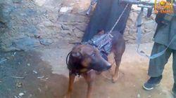 Los talibanes a EEUU: Tenemos a vuestro perro