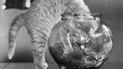 Los animales de la semana: especial gatos vintage