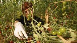 La UE señalará los productos israelíes de zonas ocupadas