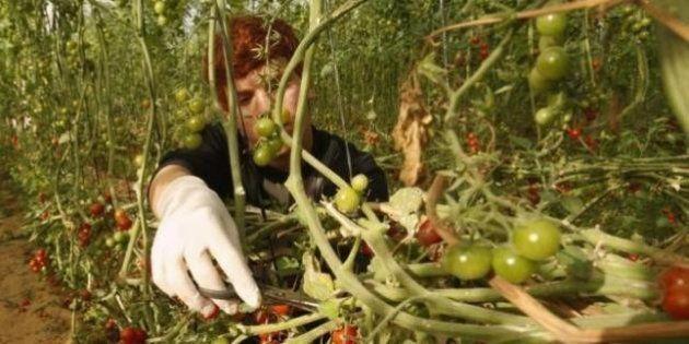 La UE señalará los productos israelíes de zonas ocupadas ilegalmente en