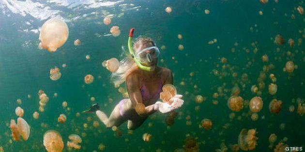 ¿Qué hacer si te pica una medusa?: el CSIC prevé más medusas este