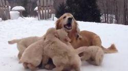 Te vas a derretir al ver jugar a estos cachorritos con su madre en la nieve