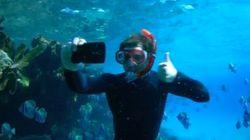 Mira quién está en el fondo del mar
