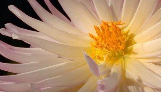 ''Tenemos que enamorarnos de la belleza de la naturaleza para