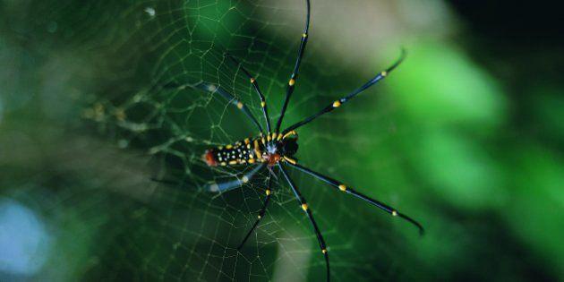 Mucho más que una tela de araña: un material para hacer baterías recargables más