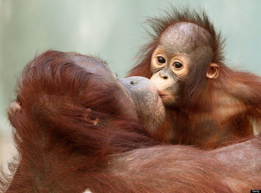 Fotos de animales para sonreír: el amor existe