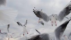 Los pájaros que parecen de Pixar y otras 19 fotos de la